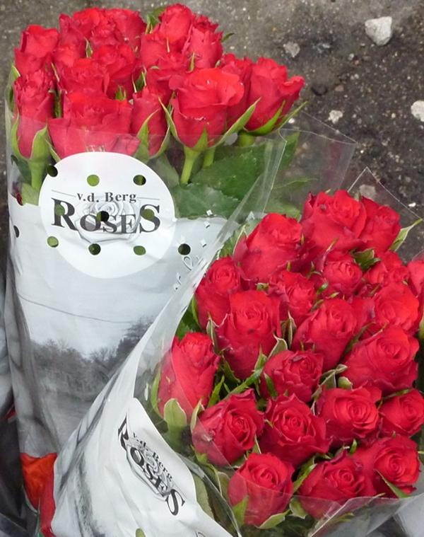 Franks roser