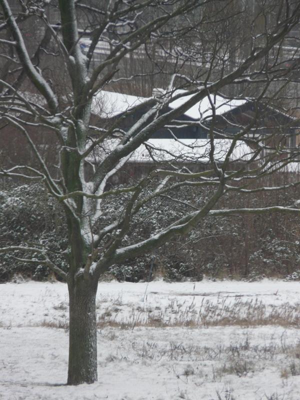 Sne på en tirdag